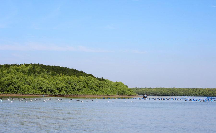 Về Cần Giờ khám phá làng nuôi hàu lớn nhất Sài Gòn