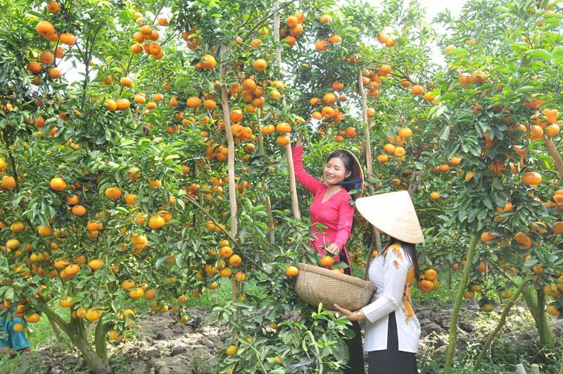 Giá trái cây đặc sản ở miền Tây cao ngất ngưởng dịp cận Tết