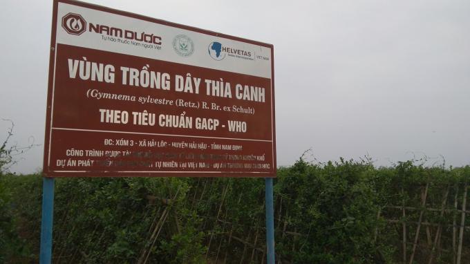 Công bố Quốc tế về hoạt chất mới trị tiểu đường từ dây thìa canh Việt Nam