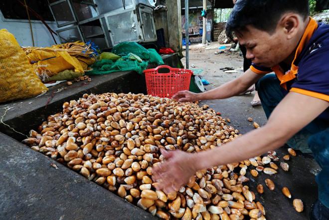 Lâm Đồng thông tin chính thức về cơn sốt hạt sầu riêng
