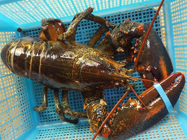 Mua hải sản tiền triệu về nhà chế biến