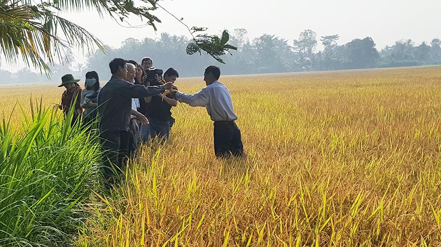 Saigon Co.op đảm bảo lợi nhuận cho nông dân vùng lúa gạo sạch Vĩnh Long
