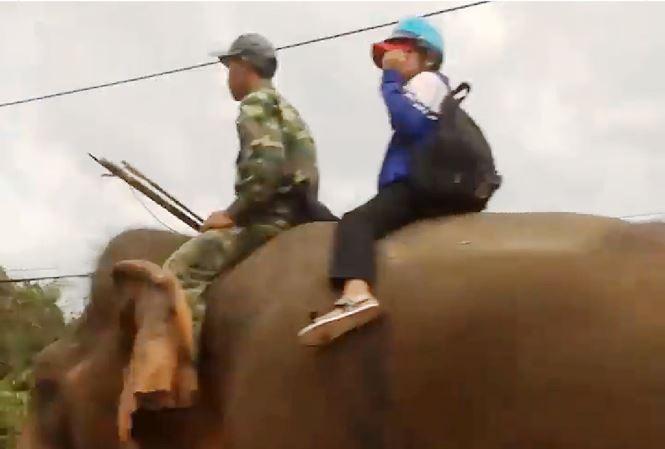 Xôn xao hình ảnh dùng voi đưa học sinh đến trường ở Đắk Lắk