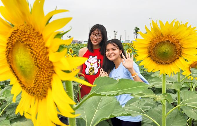 Cánh đồng hoa hướng dương rộng 18.000 m2 ở Sài Gòn thu hút giới trẻ đến tham quan & chụp hình