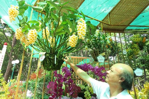 Festival hoa lan năm 2019 tại Thành phố Hồ Chí Minh