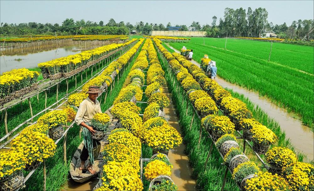 Làng hoa Sa Đéc có nhiều loại hoa mới phục vụ thị trường Tết 2020