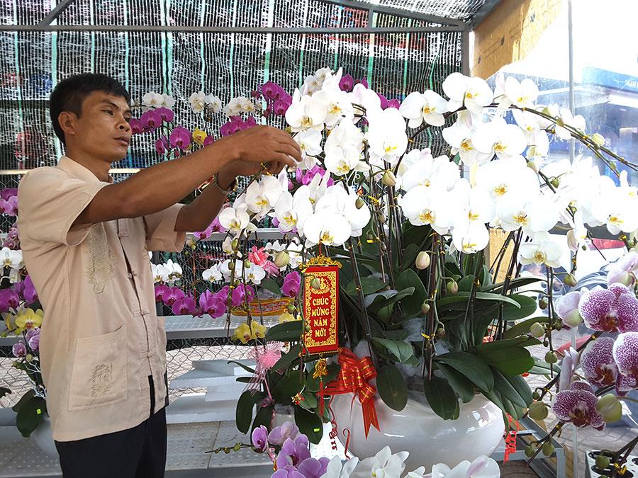 Hoa lan hồ điệp đắt hàng