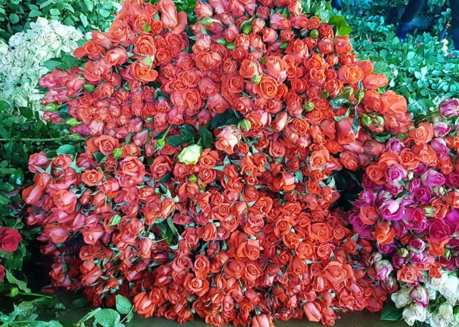 Giá hoa hồng Đà Lạt giảm mạnh dịp lễ Valentine