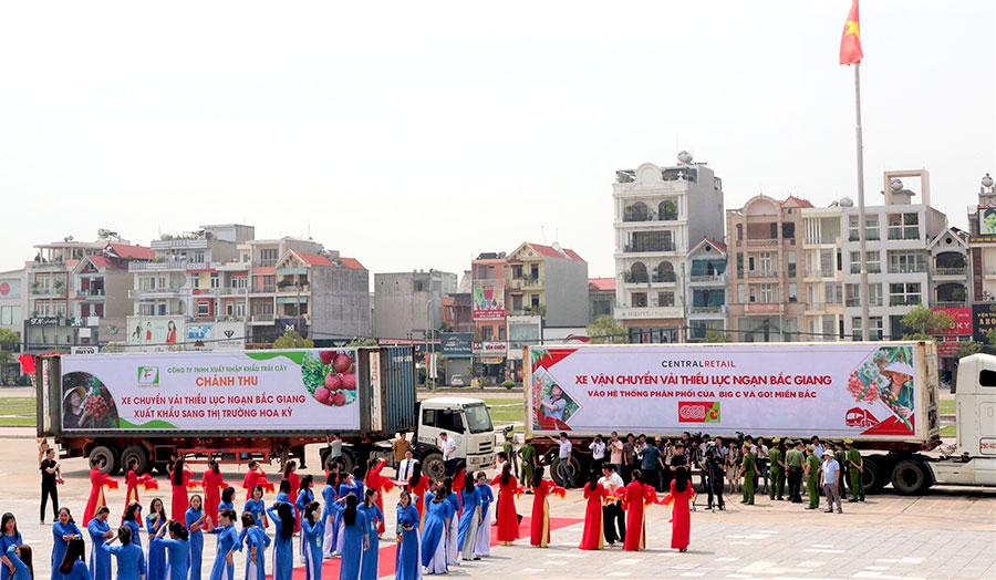 Central Retail sẽ tiêu thụ 1.000 tấn vải Lục Ngạn - Bắc Giang năm 2020