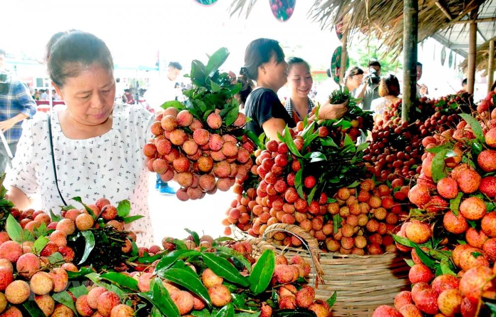 Hơn 50 doanh nghiệp, hợp tác xã tham gia tiêu thụ vải ở Bắc Giang