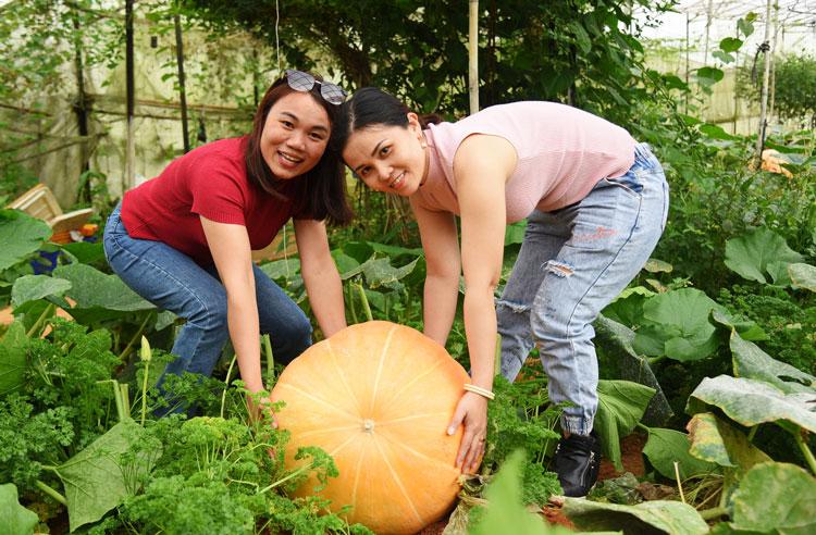 Ngắm vườn bí ngô khổng lồ của nông dân ở Đà Lạt