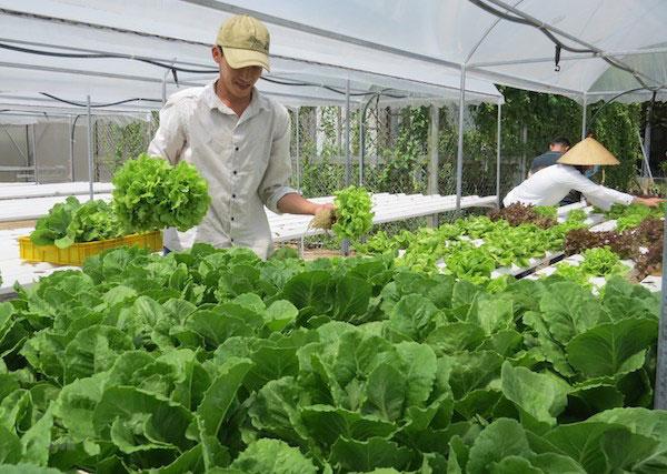 Mưa bão kéo dài, nhiều loại rau ngắn ngày tiếp tục tăng giá mạnh
