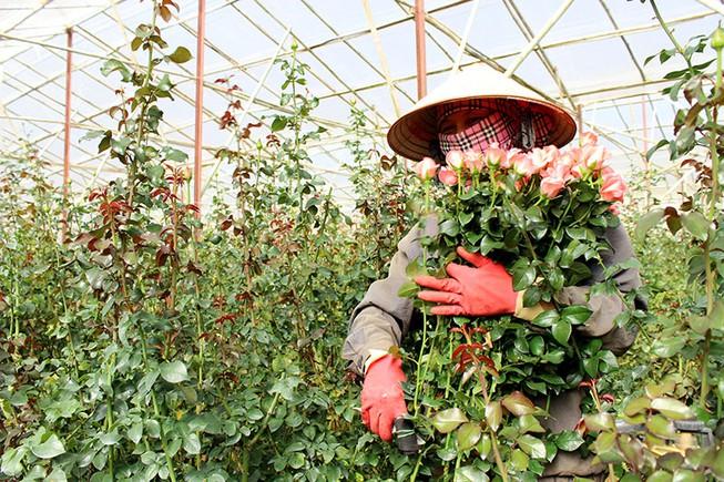 Cận lễ 20/11 các loại hoa tăng giá mạnh