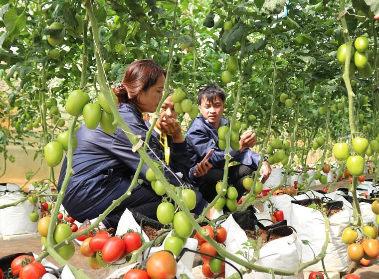 Khảo sát rau, hoa Lâm Đồng phục vụ thị trường TP Hồ Chí Minh dịp Tết Tân Sửu 2021