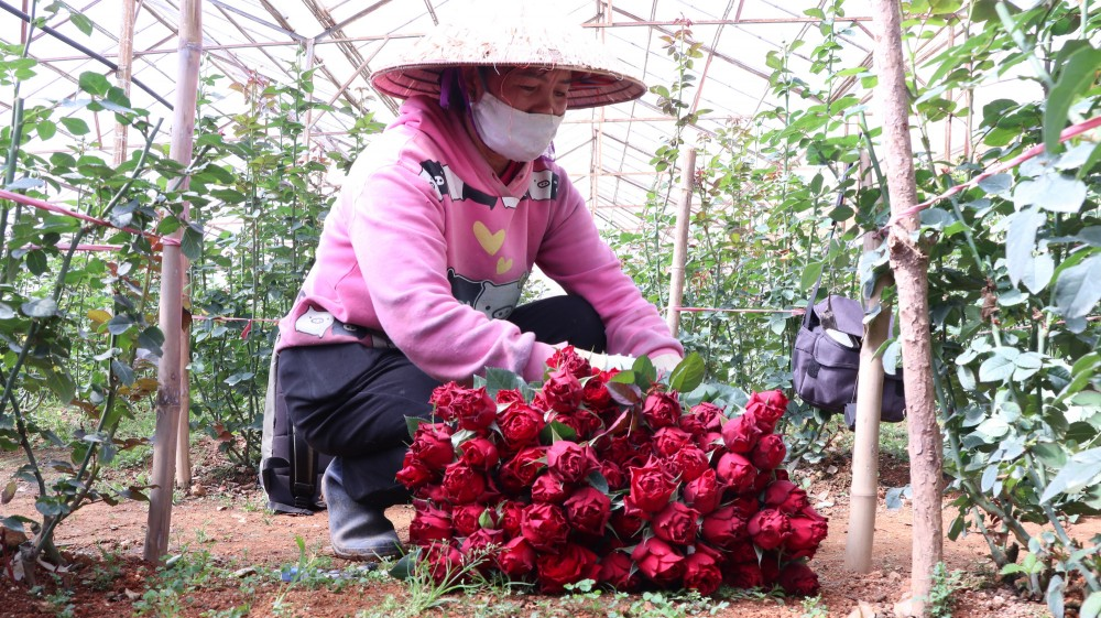 Hoa hồng tăng giá mạnh cận lễ 20.10